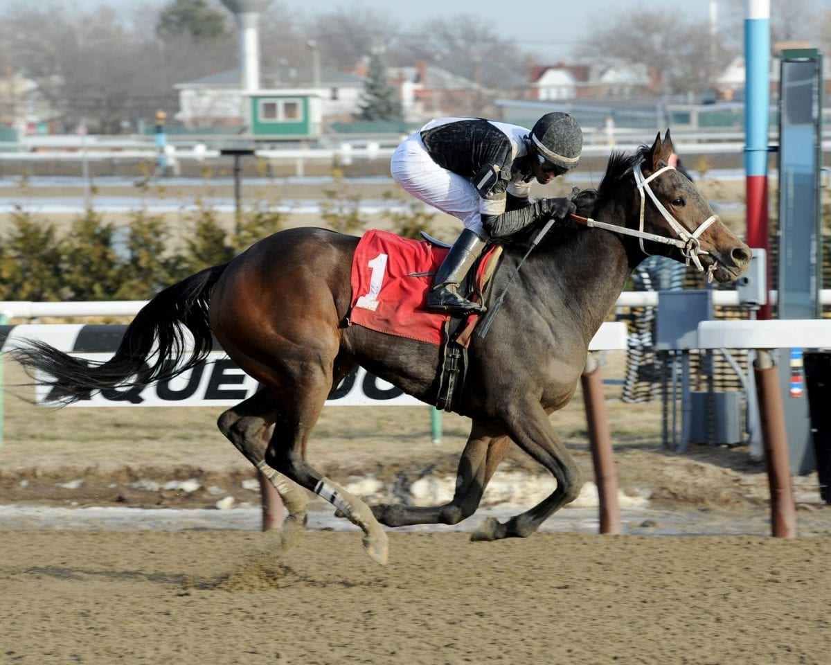 Rooting interests: 'Joint' Returns Servis to Pimlico