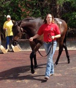 Hip 562, a Hard Spun colt, brought $34,000.