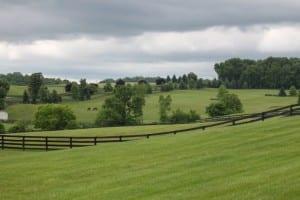 Woodslane Farm. Photo by Nick Hahn.