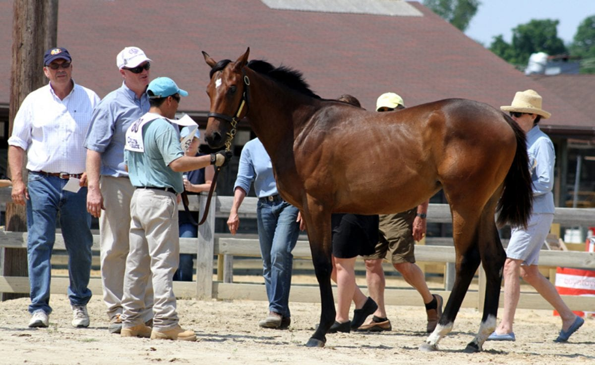 Dark Hollow Farm takes home top prize at MHBA Yearling Show