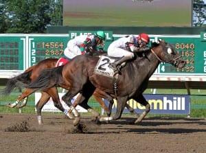 Cherokee Artist nips Ribo Bobo to win the Mr. Prospector Stakes at Monmouth Park. Photo By Ryan Denver/EQUI-PHOTO