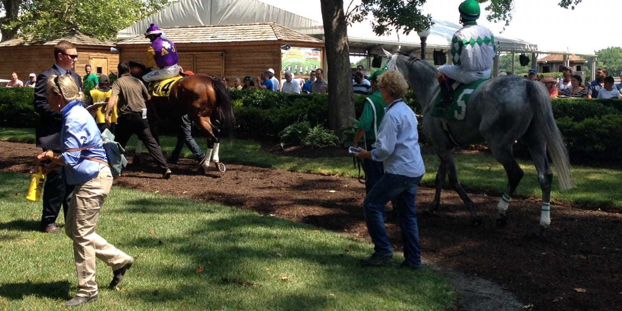 DTHA offers second chance stallion auction