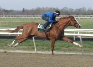 Pixie Dust stretches her legs in a morning work. Photo by Fenneka Bentley.