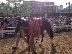Untapable was the star of the show before the Haskell. Photo by The Racing Biz.