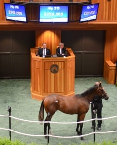 Hip 310, which Marshall Silverman consigned,  sold at Fasig Tipton NY Bred sale for $250,000. Photo courtesy of Fasig-Tipton.