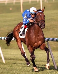 Moon River was much the best in the second division of the Jamestown at Laurel Park. Photo by Jim McCue, Maryland Jockey Club.