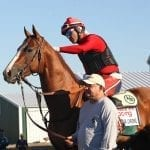 California Chrome secure atop NTRA Top Thoroughbred Poll