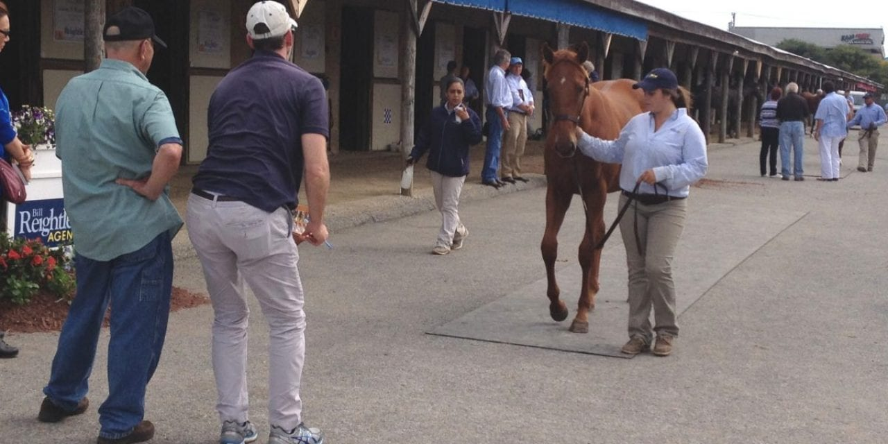 Kip Elser, turning gawky yearlings into sale toppers