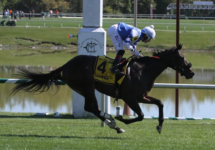 Big fields slated for Laurel Park juvenile stakes