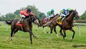 Other Cheek (right) gets pipped at the wire in his last start by Dramedy. Photo by HoofprintsInc.com.