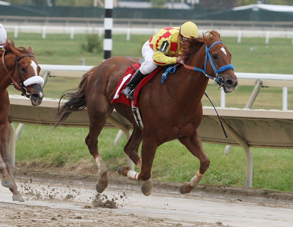 Deep field heads Willa on the Move Stakes