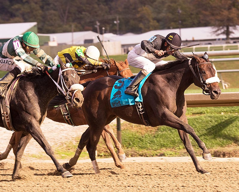 RaceBrief: Horses we watched