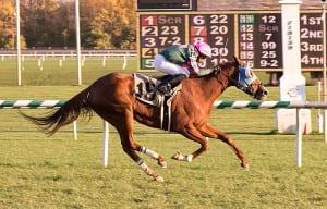 Vicky Ticky Tavie. Photo by Jim McCue, Maryland Jockey Club.