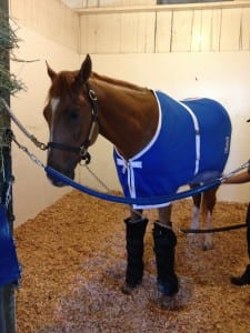 V. E. Day awaits his next big racing day. Photo by Lauren Woolcott.