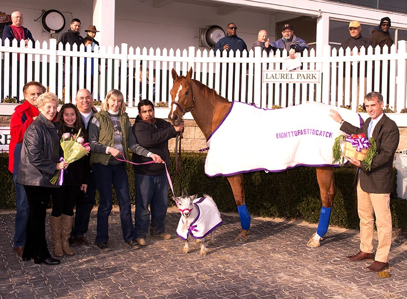 Eighttofasttocatch, and Gigi the goat, were feted Saturday at Laurel. Photo by Jim McCue, Maryland Jockey Club.