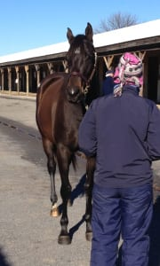 Delaneys Star checks you out. Photo by The Racing Biz.