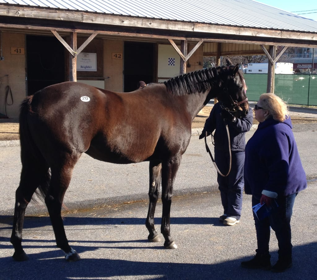 Buyers look over eventual sale-topper Delaneys Star. Photo by The Racing Biz.