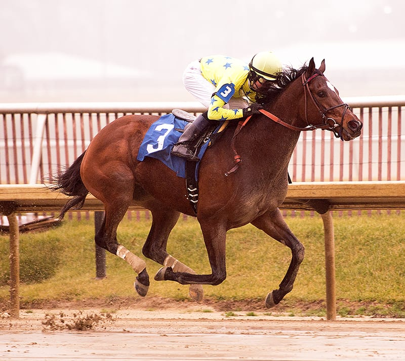 Star Pearl takes the Nellie Morse Stakes. Photo by Jim McCue,Maryland Jockey Club.