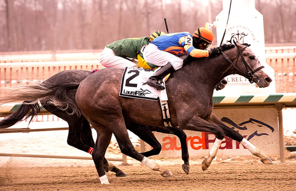 Misconnect was up in time to defeat Cutty Shark and take the Grade 3 General George today. Photo by Jim McCue, Maryland Jockey Club.