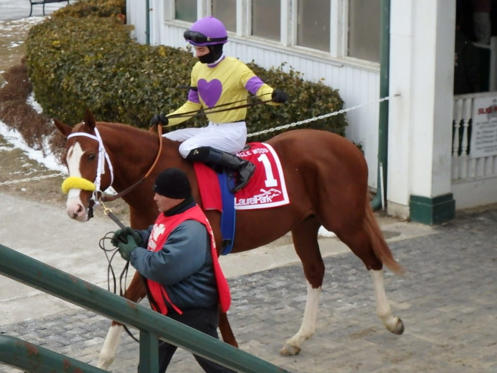Combat Diver before the Miracle Wood. Photo by The Racing Biz.