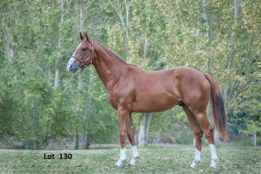 Kip Elser's international currency: racehorses