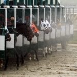 Racetrack vets call for equine safety enhancements