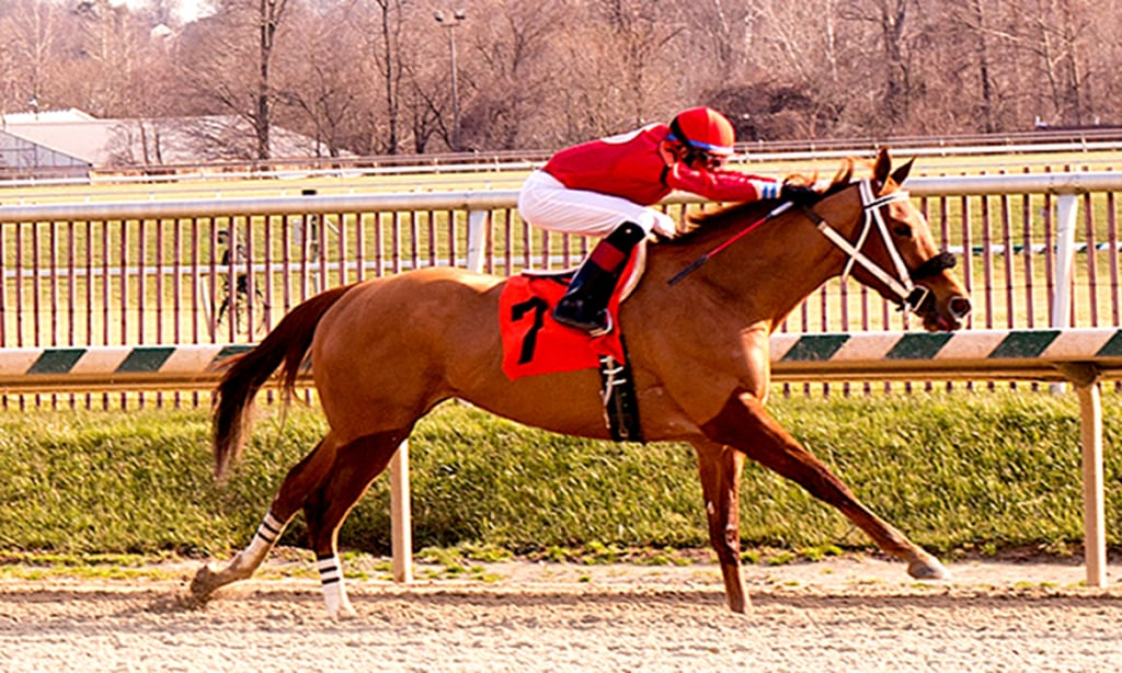 Lady Vivien, here winning on December 27, 2014, was in the middle of a challenging situation. Photo by Jim McCue, Maryland Jockey Club.
