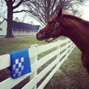 One of Secretariat's descendants keeps watch over the farm. Photo courtesy of The Meadow Event Center.