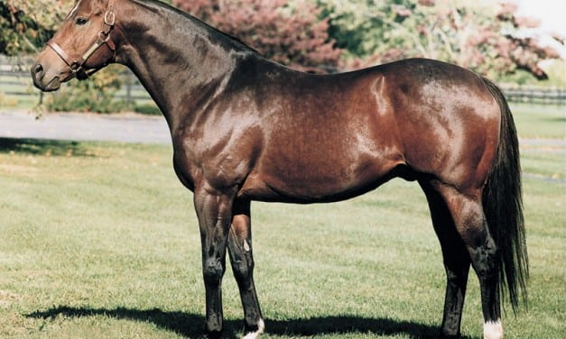 Top Maryland sire Not for Love dies