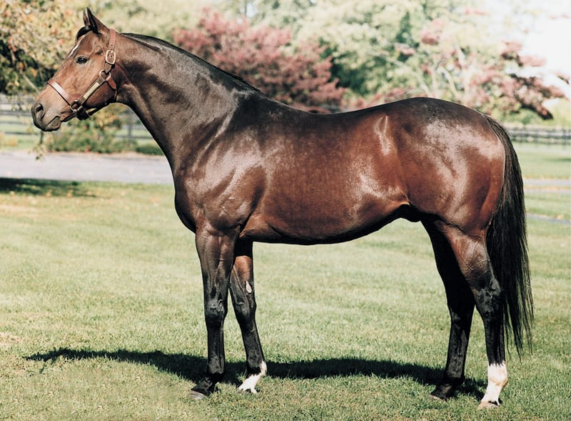 Top Maryland sire Not for Love pensioned