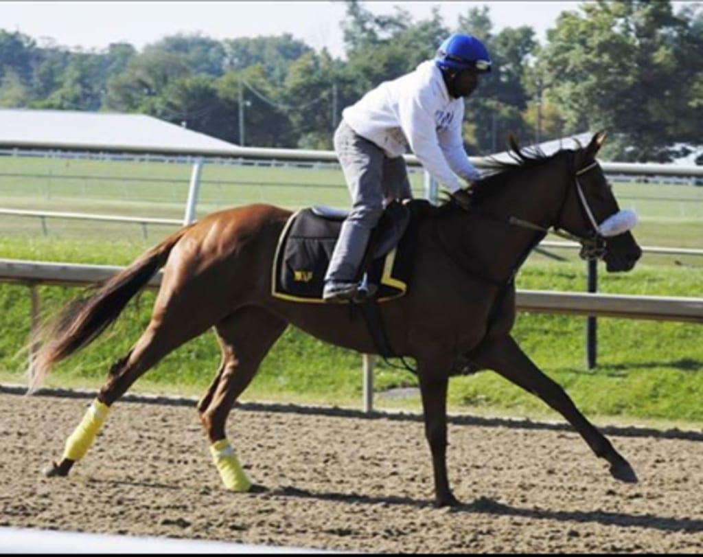 Jeyran. Photo courtesy of the Maryland Jockey Club.