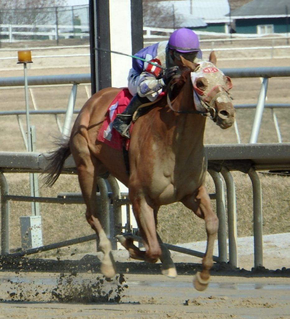 The very good Page McKenney romped in today's Harrison Johnson. Photo by The Racing Biz.