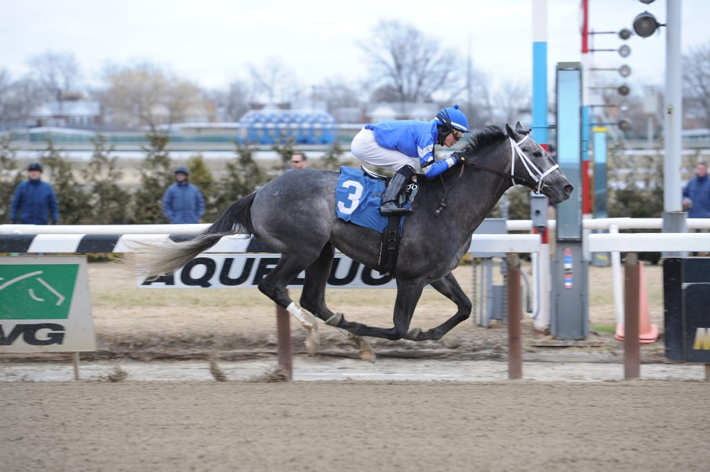 All Hands was an easy maiden winner. Photo courtesy of the Maryland Jockey Club.