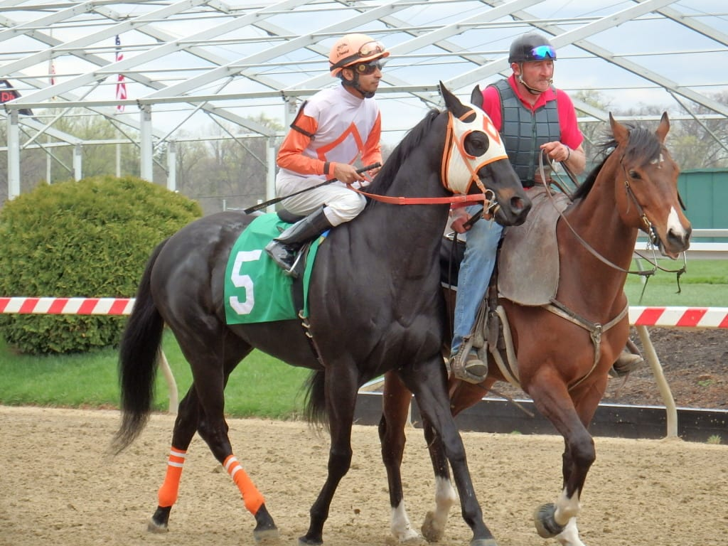 Ben's Cat prior to this afternoon's race. Photo by The Racing Biz.