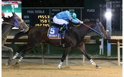 Star WV-bred Down Town Allen euthanized
