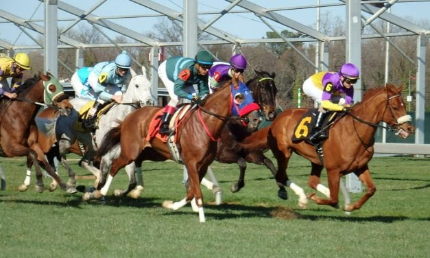 Equine fatality rate declines at Maryland tracks
