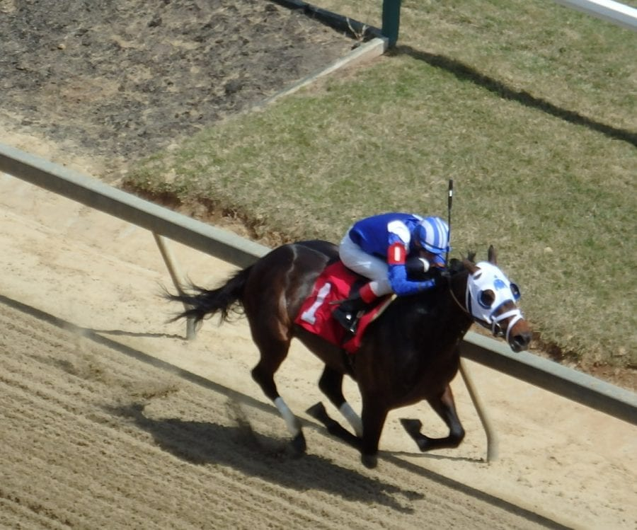Scenes from Pimlico's opening day