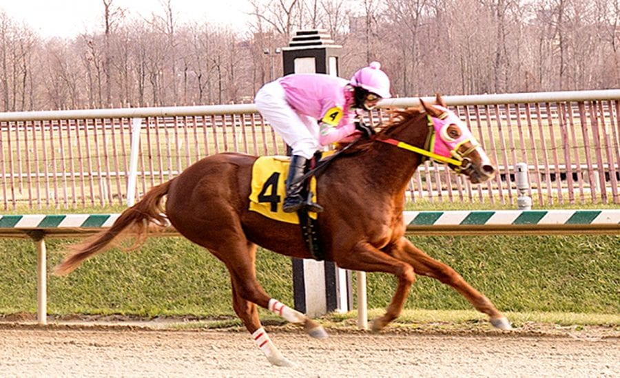 Stellar Wind blows to top of Top Midlantic-bred Poll