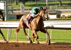 Stellar Wind took every first-place vote among three-year-olds in the first poll. Photo courtesy of Santa Anita Park.