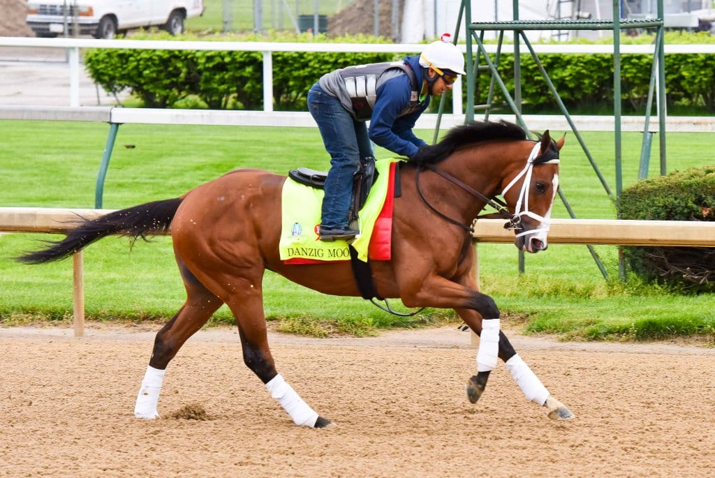 Danzig Moon training prior to the Kentucky Derby. Photo provided by the Maryland Jockey Club.