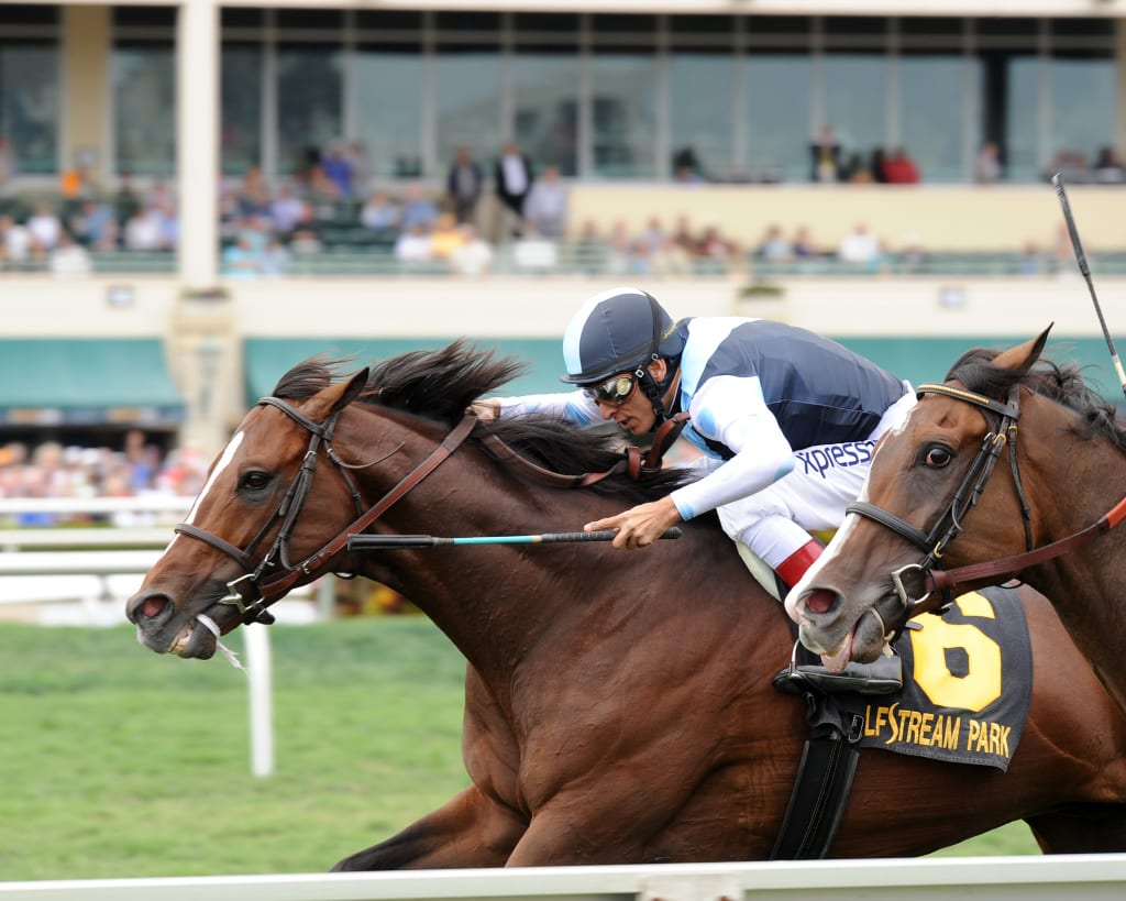 War Correspondent, here winning the Appleton, has eyes on the Grade 2 Dixie on Preakness day. Photo by Lauren King.