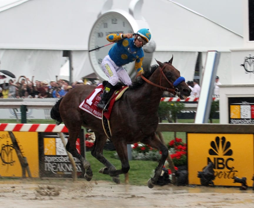 American Pharoah: history awaits. Photo by Laurie Asseo.