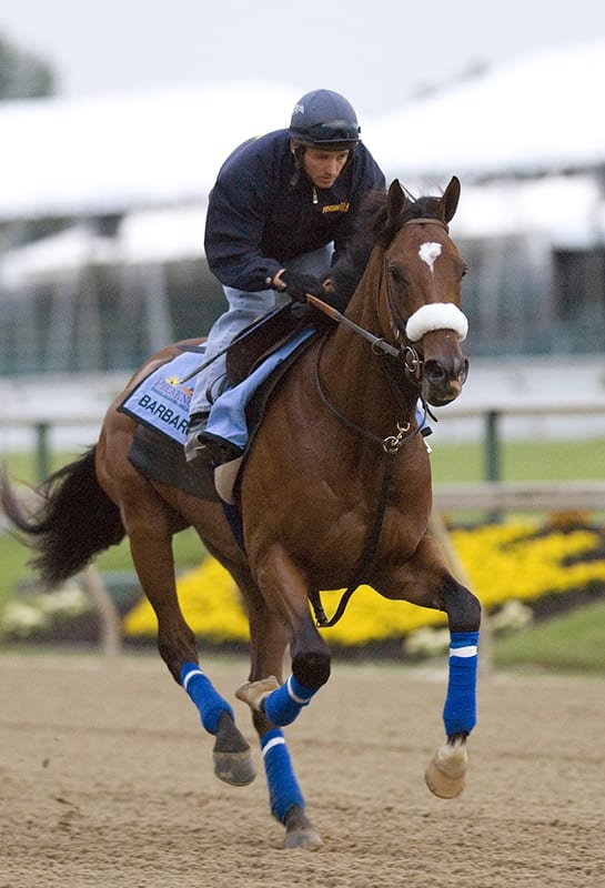 Divining Rod to carry Lael colors into Preakness
