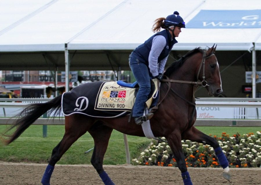 Preakness profiles: Divining Rod