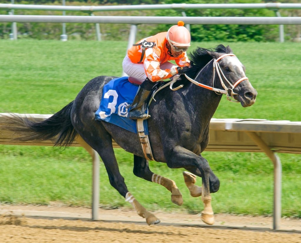 Three-year-old Fleetwood Star won at first asking on May 20 for trainer Ron Alfano. Photo by Hoofprintsinc.com.