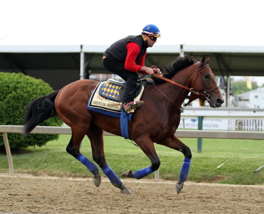Major Belmont contenders stretch their legs