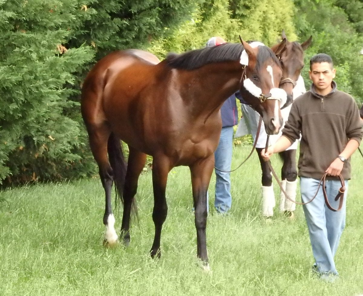 Preakness profiles: Tale of Verve