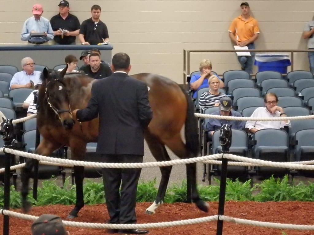 Hip 308, by Gone Astray, brought a winning bid of $47,000. Photo by The Racing Biz.