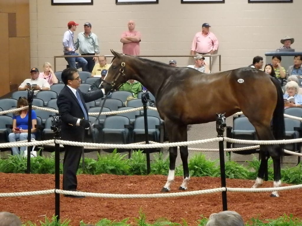 Hip 309, by Tiz Wonderful, brought $67,000. Photo by The Racing Biz.