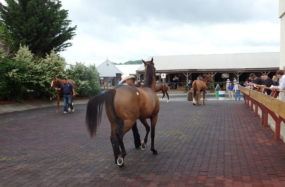 "Million-dollar horse spurs ""great"" Fasig-Tipton sale"
